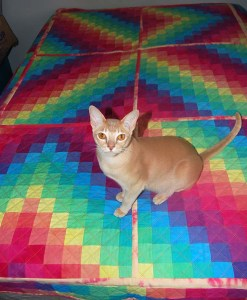 SirSprocket on Quilt